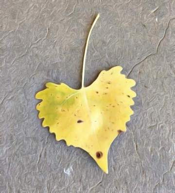 Heart-shaped leaf on the ground