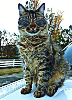 Hobicat is one cool cat!