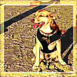Buddy Om - Bella Rose and Friends