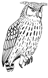 owl_white on clear small.png