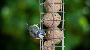Garden Bird Photography with my Fujifilm GFX