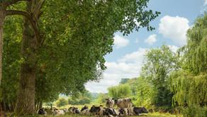 Quintessential English Country Scene | Fujifilm GFX 50R plus 32-64mm
