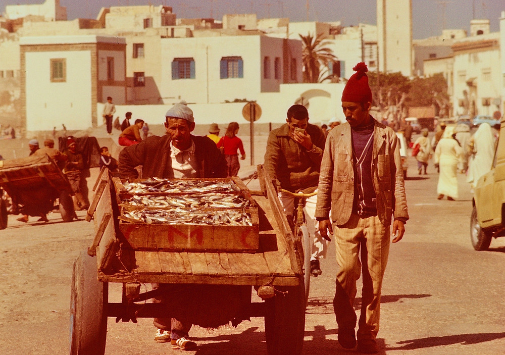 Fishermans catch Safi Morocco 1978