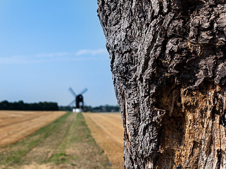 Close up of tree bark with Pitstone Windmill in distance