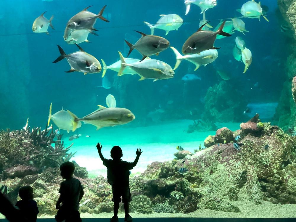 Aquarium Sydney shot with iPhone X