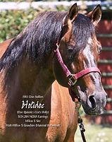 Grandsire: Holidoc AQHA Stallion