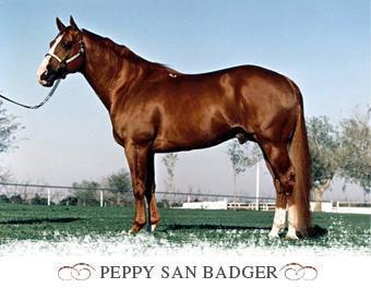 peppy san badger.jpg