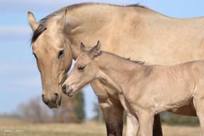 PJs Beaver Blackburn with foal