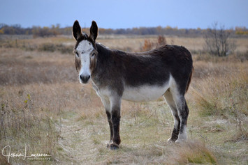 Eeyore our donkey