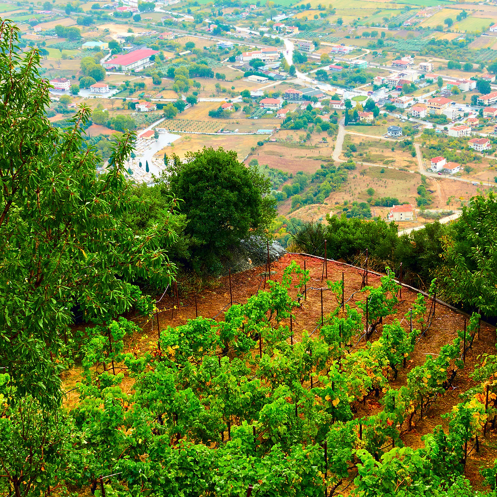 Meteora Wine | Best Things to Do in Meteora Greece