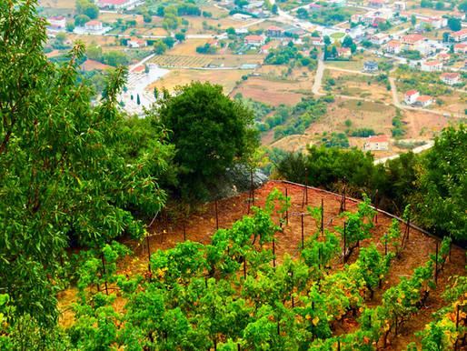 Meteora Wine