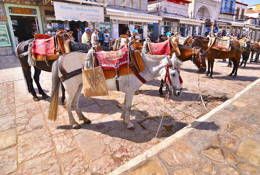 Donkeys | Hydra | Best Things to Do in Greece