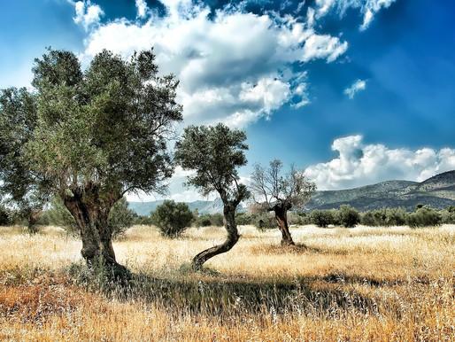 Lesbos Landscape