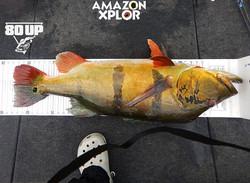 Pescaria no amazonas - tucunare (66)