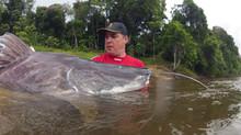 Piraíbas Gigantes - Suriname