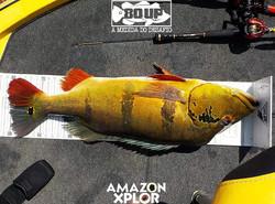 Pescaria no amazonas - tucunare (113)