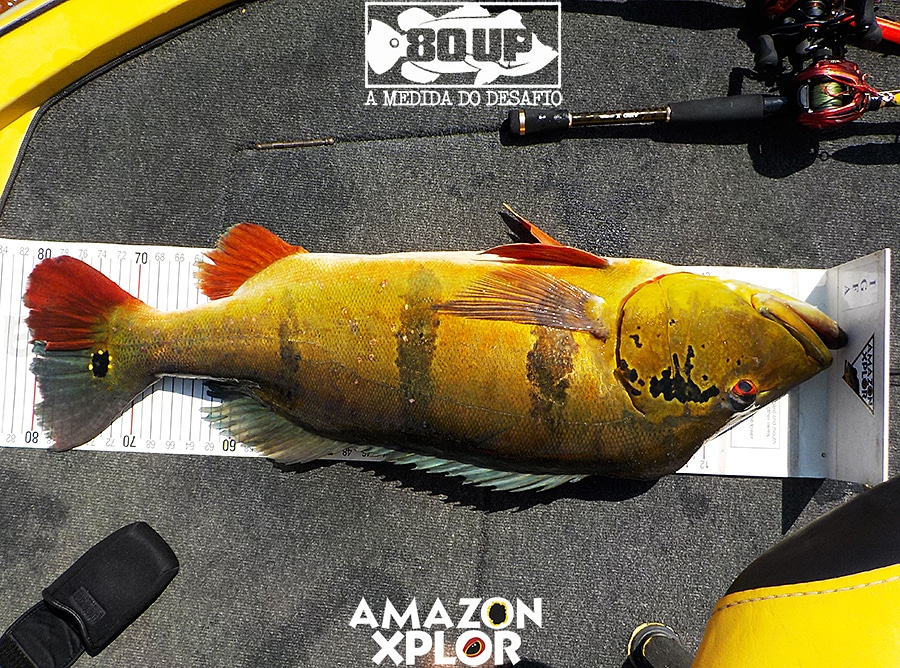 Pescaria no amazonas - tucunare (71)