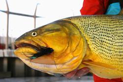 La Zona - Pescaria na argentina