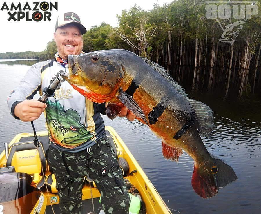 Pescaria no amazonas - tucunare (106)