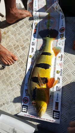Pescaria de tucunaré em roraima (17)