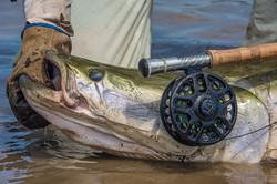 Pescaria-de-pirarucu (15)