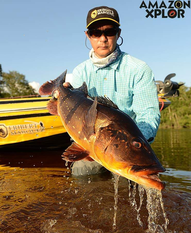 Pescaria no amazonas - tucunare (55)