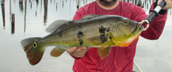 Pescaria em Balbina (9)_edited