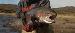 jurassic_lake-pescaria_de_truta_29