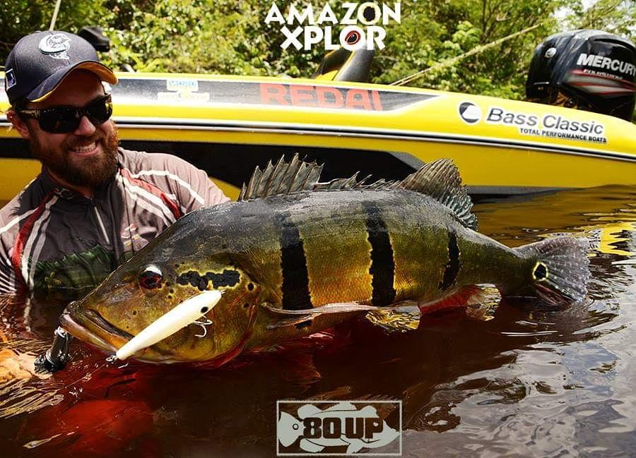 Pescaria no amazonas - tucunare (110)