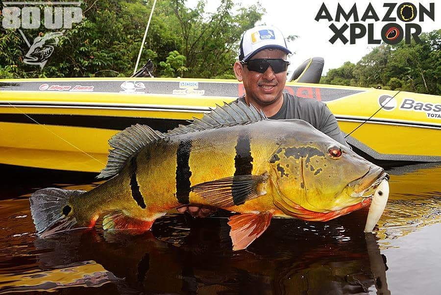 Pescaria no amazonas - tucunare (105)