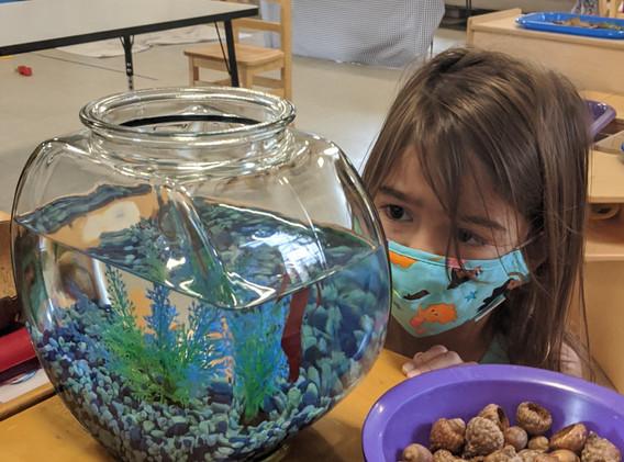Pre-K's Pet Fish