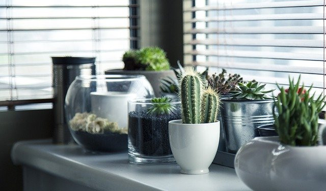 A white counter with different plants.