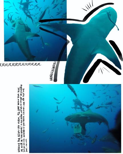 shark diary