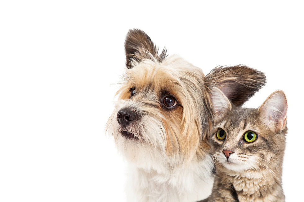 #1 All Systems shampoos and conditioners are pH balanced for pets, reliable and proven. They are formulated to respond to every grooming challenge and are preferred by professionals worldwide ... #1 All Systems products quite simply get the job done.