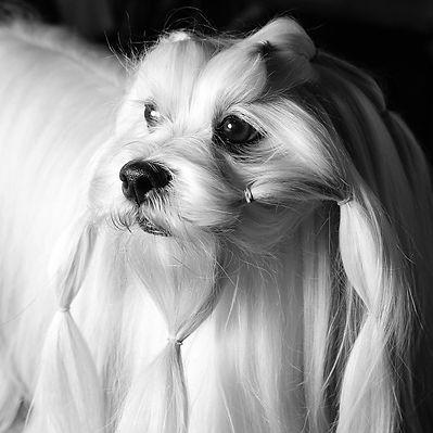 Vital Energy For Your Pets' Longevity