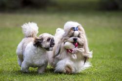 Longhaired Dog Breeds