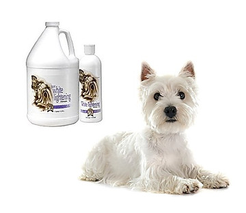 Keep white coats white with #1 All Systems shampoo that uses sage and natural enzymes and no bluing and no bleach