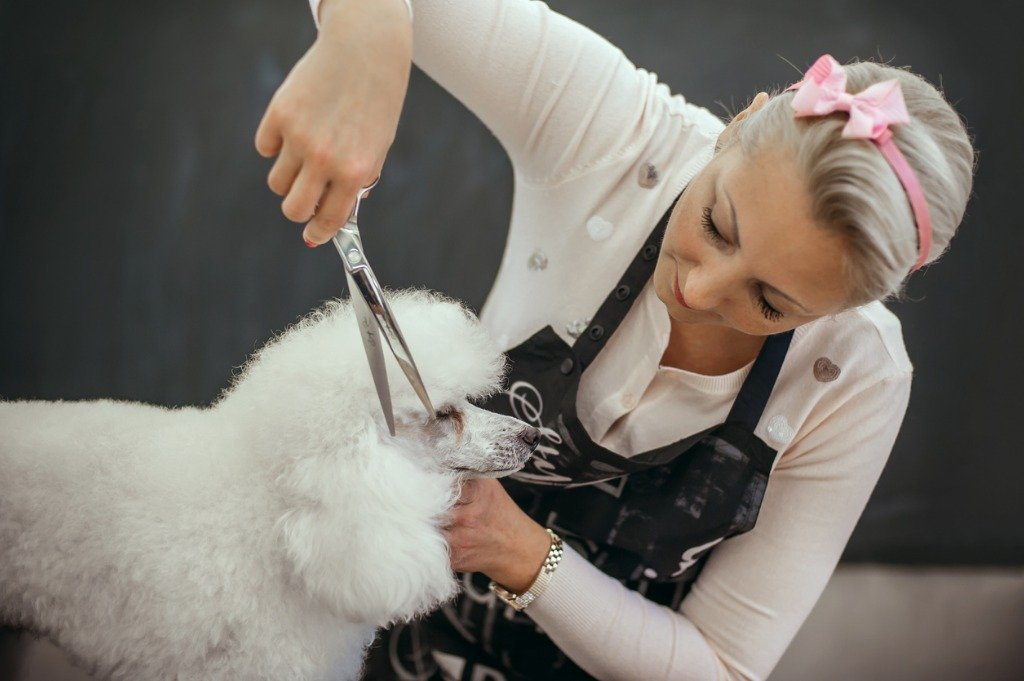 Grooming Your Dog BASIC HAIRCTUS