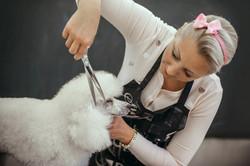 Grooming Your Dog BASIC HAIRCTUS
