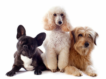 #1 All Systems For Every Breed