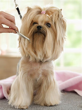 The #1 All Systems Face Comb is perfect for grooming faces and for small pets.