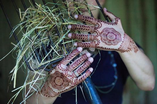 Henna on the farm