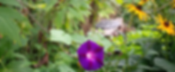 Sanctuary Garden with Mandela