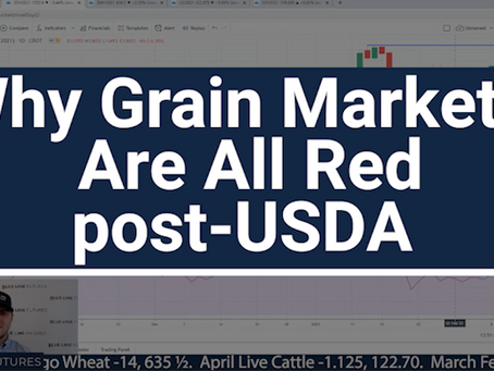 Grain Markets All Red post-USDA | What To Expect With Oliver Sloup | Tech Talk