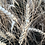 Thumbnail: 2KG Whole Wheat Flour
