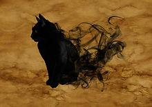 cat-1002850__480.jpg