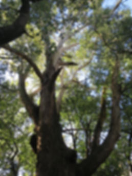 L'arbre des contes de Marie-Rose Meysman. Conteuse