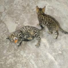 kitties123.jpg