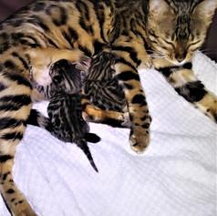itzla's first litter born 12 26 2020.jpg