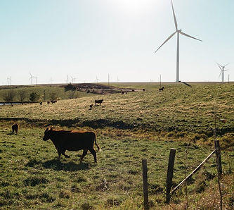 Wind_Farm_NOW.jpg